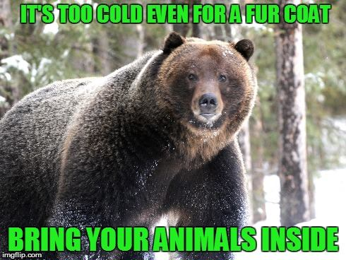bring bear inside