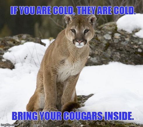 bring caugar inside