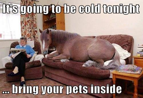 bring horse inside