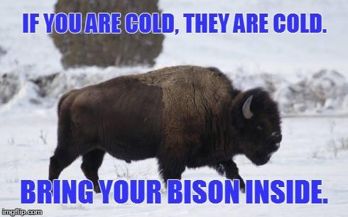 bring your bison inside