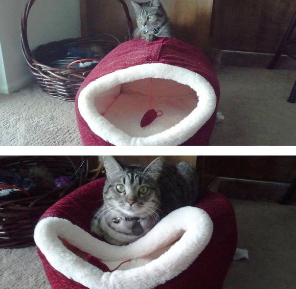 Cat-logic3__605