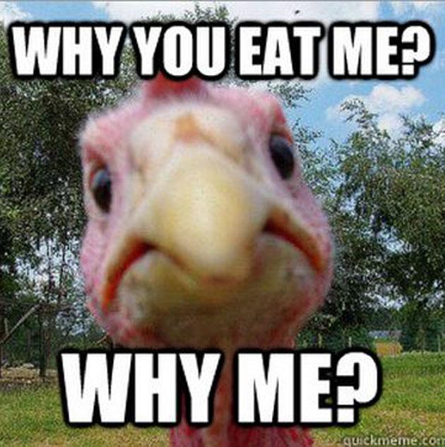 Thanksgiving memes 4