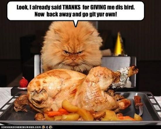 Thanksgiving memes 5