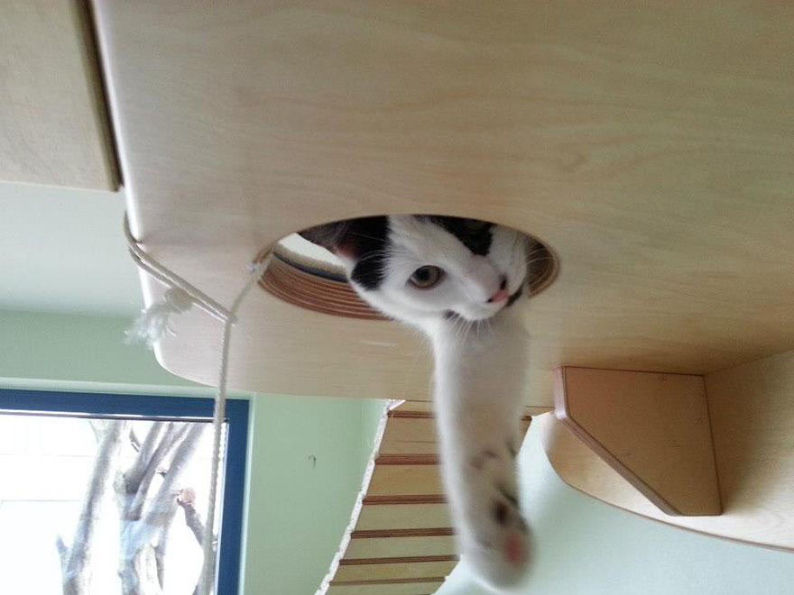 funny-cat-playground-room-Goldtatze-overhead