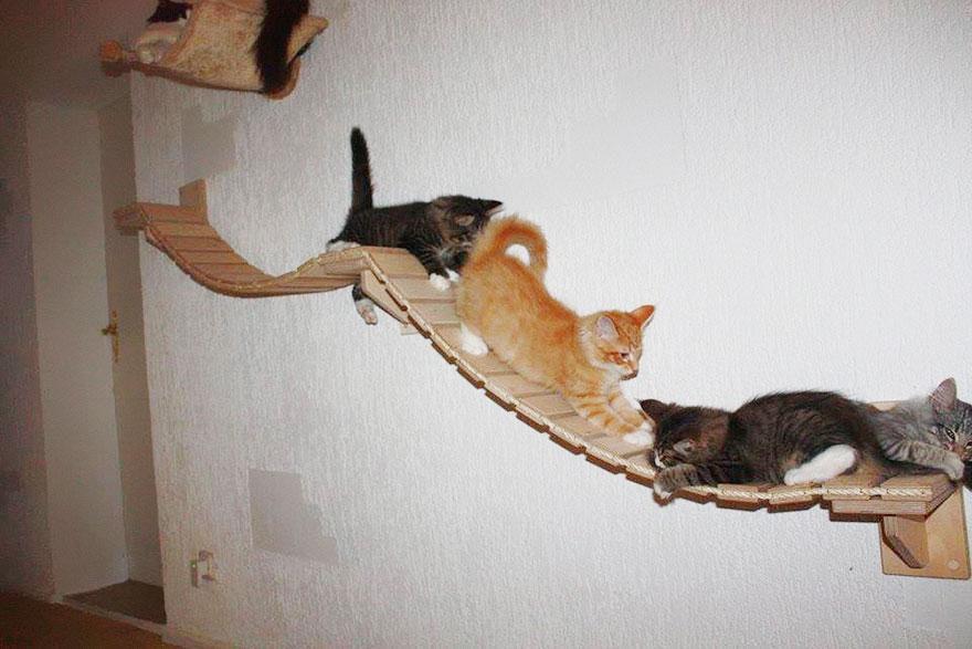 funny-overhead-cat-playground-room-Goldtatze-line