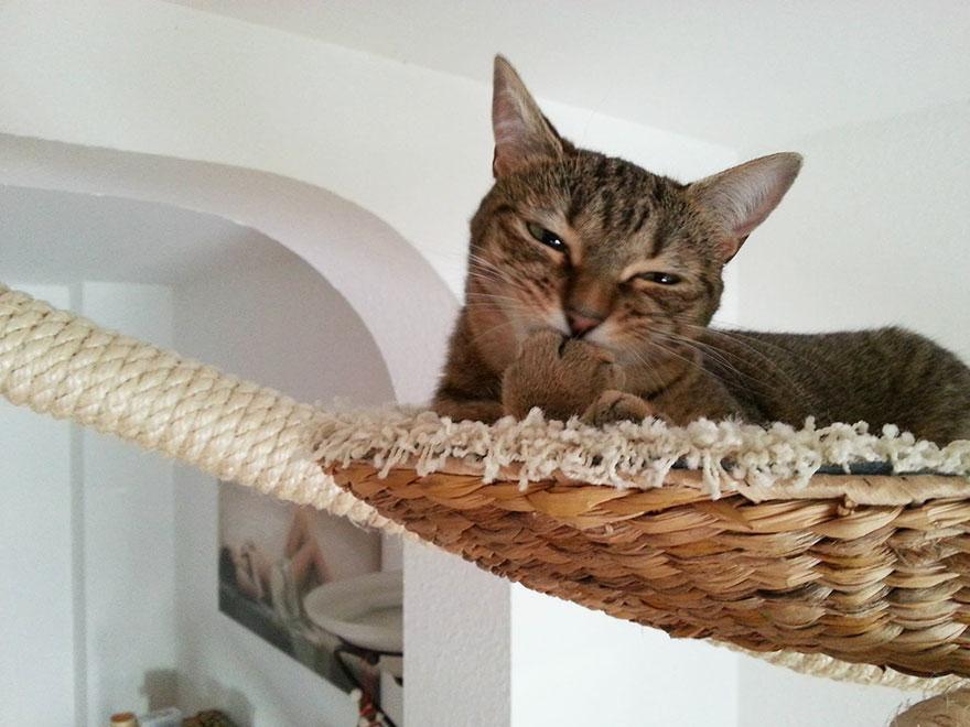 funny-overhead-cat-playground-room-Goldtatze-paw
