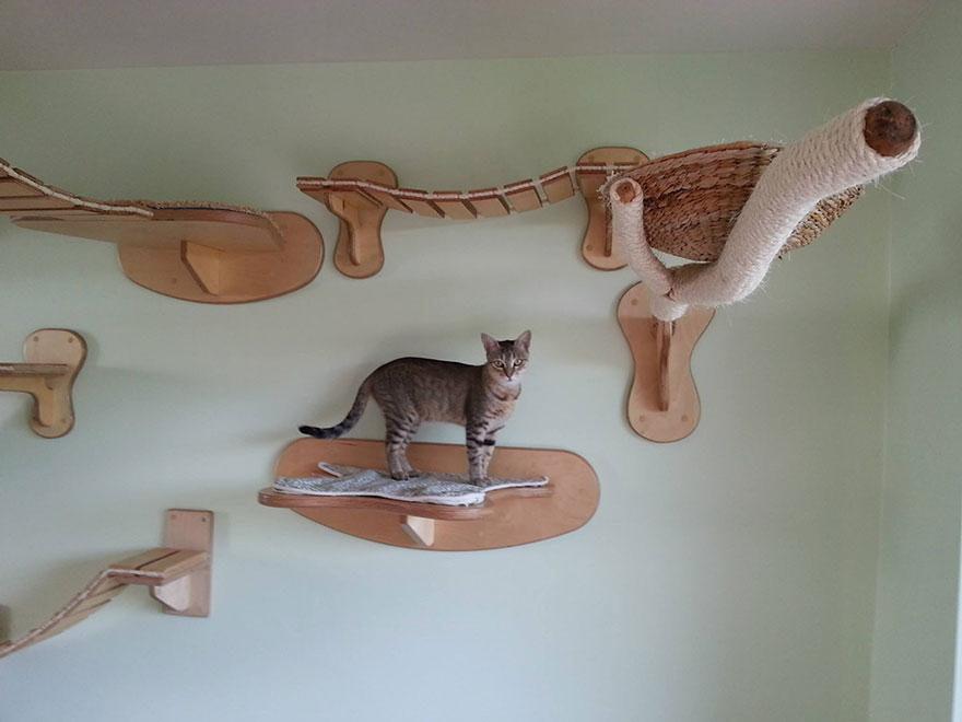 overhead-cat-playground-room-Goldtatze-nest