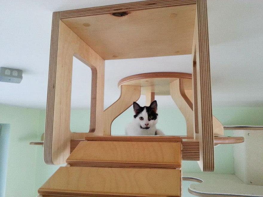 overhead-cat-playground-room-Goldtatze-wood