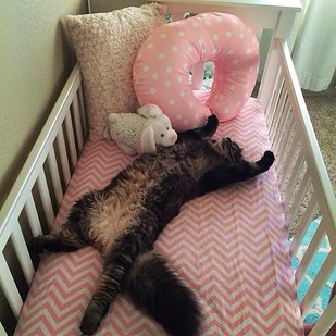 1. This cat assumed that this brand-new crib must be his new bed.