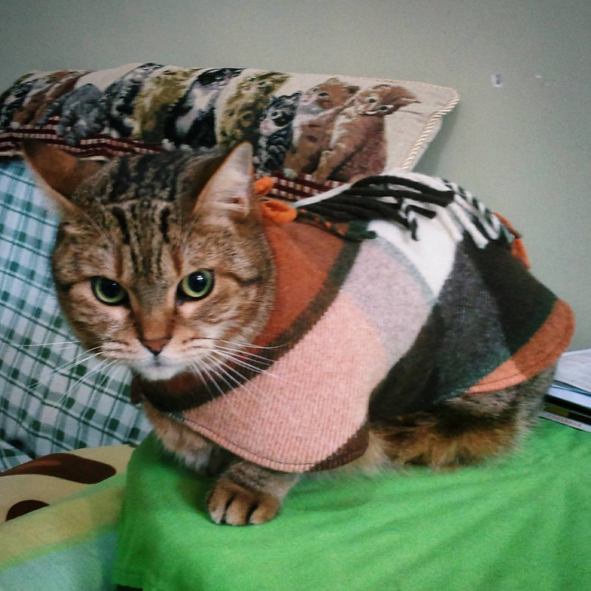 A cape is the purrfect, classy way to stay toasty