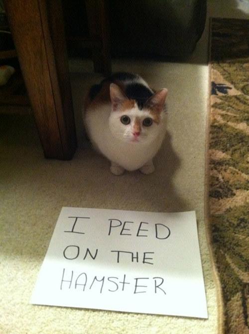 Stupid cat 1