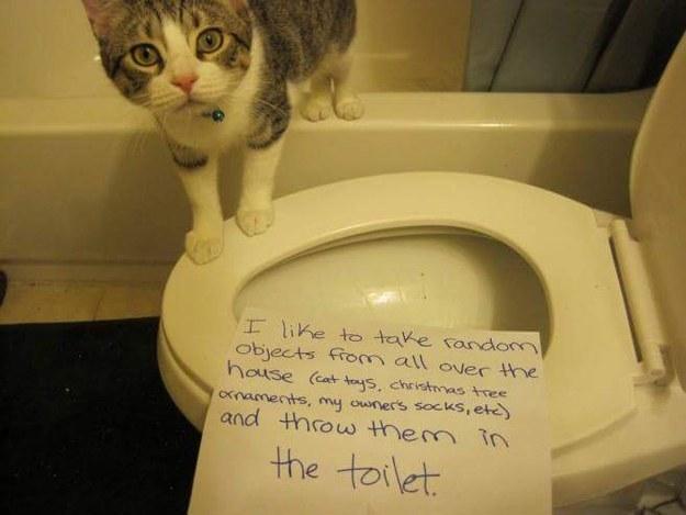 Stupid cat 2