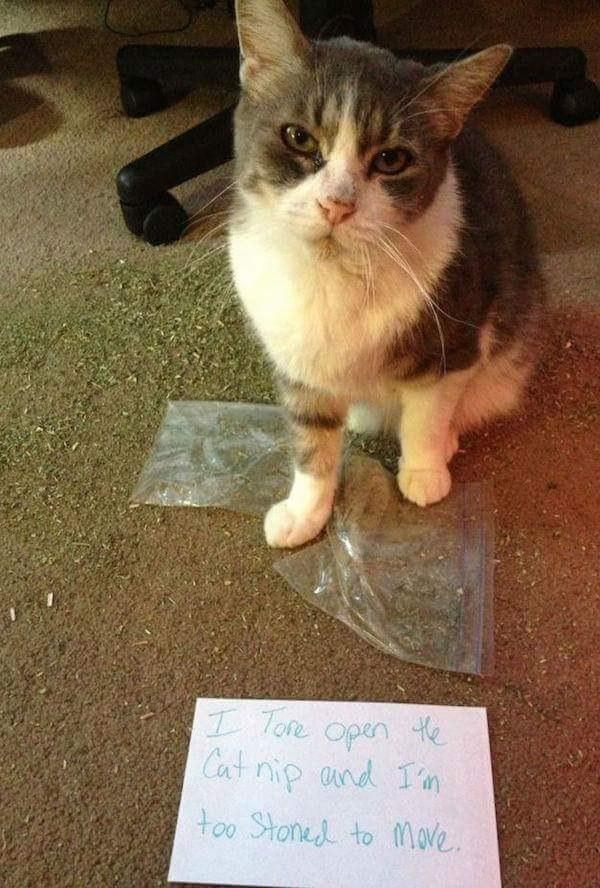 Stupid cat 5