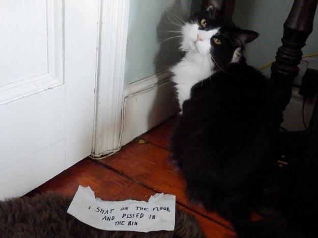 Stupid cat 7
