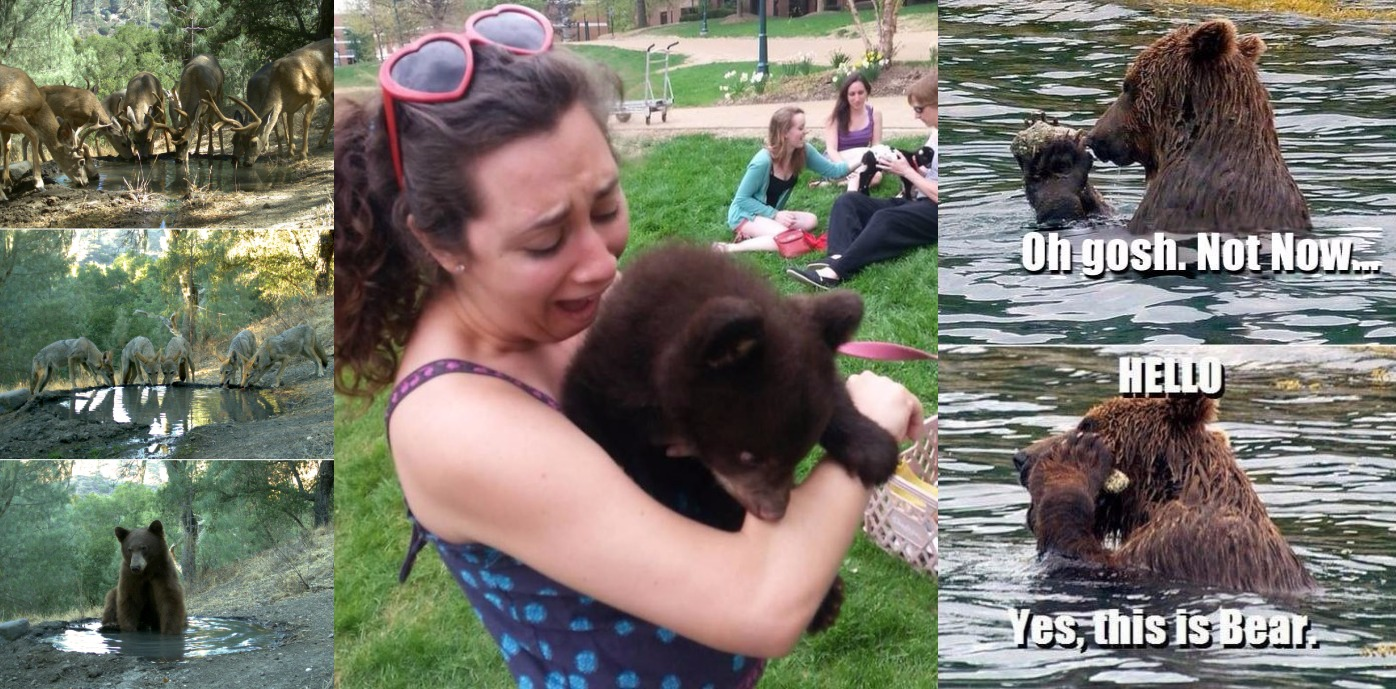 24 Times Grizzly Bears Reminded You About Your Own Life!
